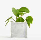 Promotional Small Concrete Potted Plant